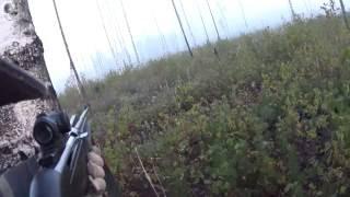 Охота на лося на реву 2016