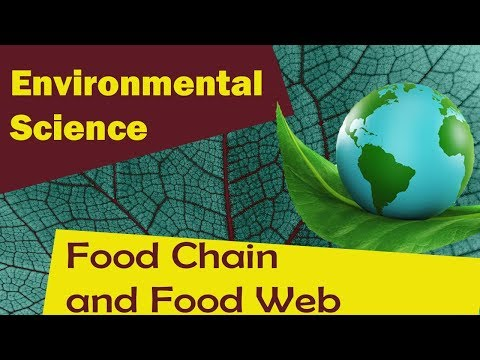 | Food Chain and Food Web | - Environmental Science