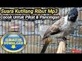 SUARA BURUNG KUTILANG RIBUT MP3