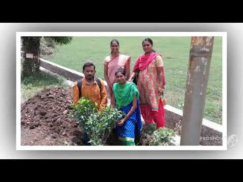 Tree Plantation Programme 1279a study center