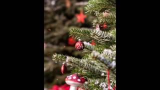 Video The Christmas Tree and the Wedding - Fyodor Dostoyevsky download MP3, 3GP, MP4, WEBM, AVI, FLV Agustus 2017