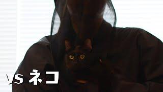 【走る!キョロちゃん缶】猫と走ってみた