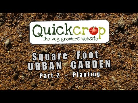 Square Foot Vegetable Gardening – Part two