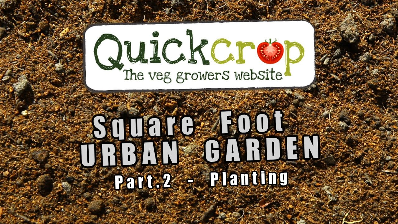 Square Foot Vegetable Gardening - Part two - YouTube