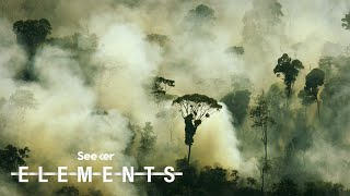 The Amazon Rainforest Doesnt Produce 20% of Our Oxygen, Heres Why