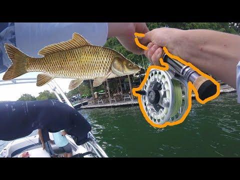 Fly Fishing For HUGE Carp!!!