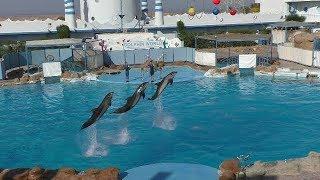 Отдых в Египте. Красивейшее шоу дельфинов. Дельфинарий в Хургаде Dolphin World EGYPT Hurghada 2018