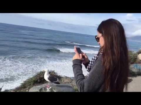 Pacific Coast Highway - Driving Big Sur