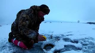 Быстрая прикормка для зимней рыбалки за 3 минуты.