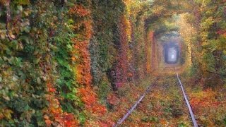 Ukraine-Rivne-Tunnel of love / Україна-Рівне-Тунель кохання