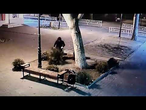 Неизвестный в центре Херсона на ул. Суворова ломает елку