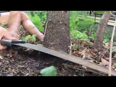 Handsaw versus Pine tree