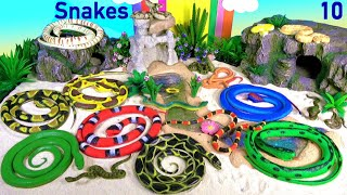 Snakes Serpent Reptile Viper Basilisk Vermin Slithery Nope Ropes 10