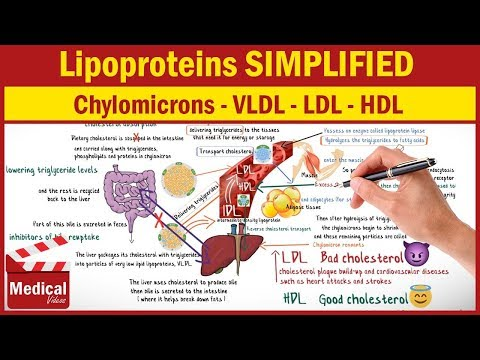[CVS] 27- Lipoproteins Cholesterol & What are Chylomicrons, VLDL, LDL and HDL ?!