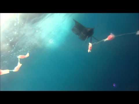 Underwater footage TrollPro3 Fishing Costa Rica. Tuna Wahoo Mahi mahi Sailfish