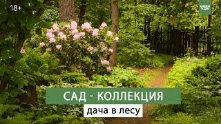 Красивый сад своими руками  Необычные растения