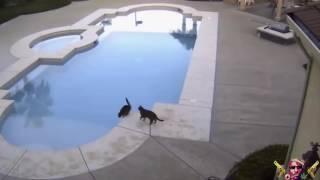 ArkadaşınI Havuza iten Piç Kedi
