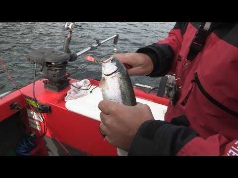 New Melones Reservoir Trout Fishing