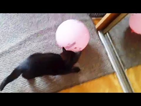 Cats VS BALLOONS (Part1) 🎈🐈 Cats PLAYING With Balloons [Funny Pets]