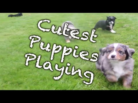Cutest Puppies Playing Compilation NEW
