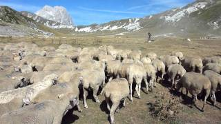 Video Cani da gregge al lavoro, PN Gransasso Laga download MP3, 3GP, MP4, WEBM, AVI, FLV Mei 2018