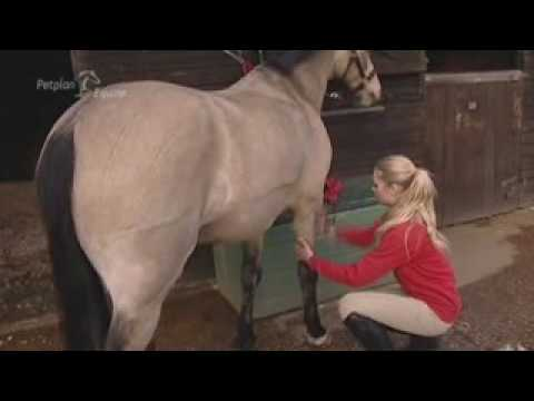 Grooming Your Horse By Yourstables.co.uk