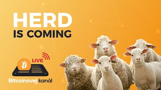 BK LIVE: Herd is coming!