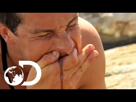 Bear Grylls' Top 3 Most Disgusting Moments  NOT FOR THE SQUEAMISH
