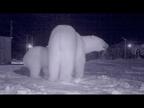 BEAR ATTACK! Halloween, One of the Most Dangerous Nights of Bear Season