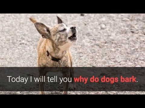 Why Do Dogs Bark at Other Dogs And People? 5 Best Reasons