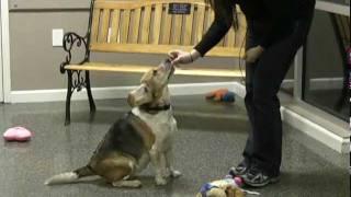 Mari's Canine Crew Tips: Sit Command