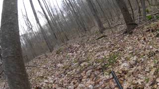 Video Bobcat Charges Turkey Hunter (Raw video) download MP3, 3GP, MP4, WEBM, AVI, FLV Agustus 2017