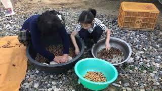 자급자족 진짜배기 도토리가루 만들고 도토리묵 만들어 먹…