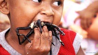 Животные, которых едят живыми. Кухня народов мира