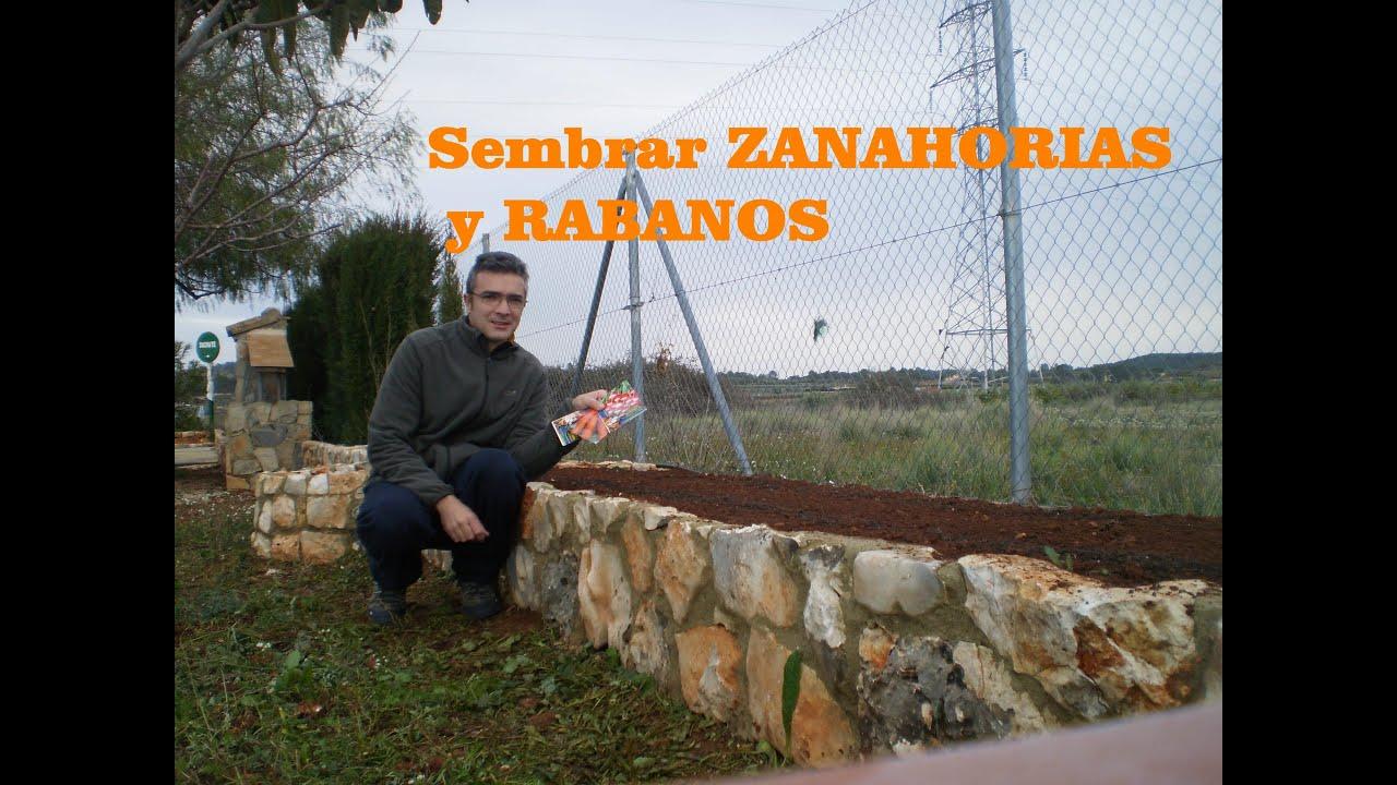 Sembrar zanahorias y r banos en el huerto youtube - Que plantar en el huerto ...