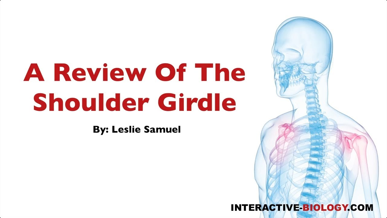 080 A Review of the Shoulder Girdle - YouTube