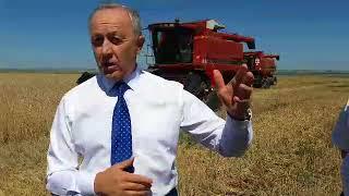 Саратовская область собрала первый миллион тонн зерна нового урожая