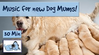 After the stress of giving birth, new dog mums then have a long job...