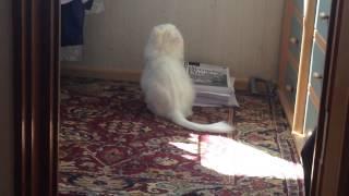 У кошки хвост дрыгается🐈