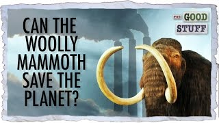 Can Bringing Back the Woolly Mammoth Save the Planet??