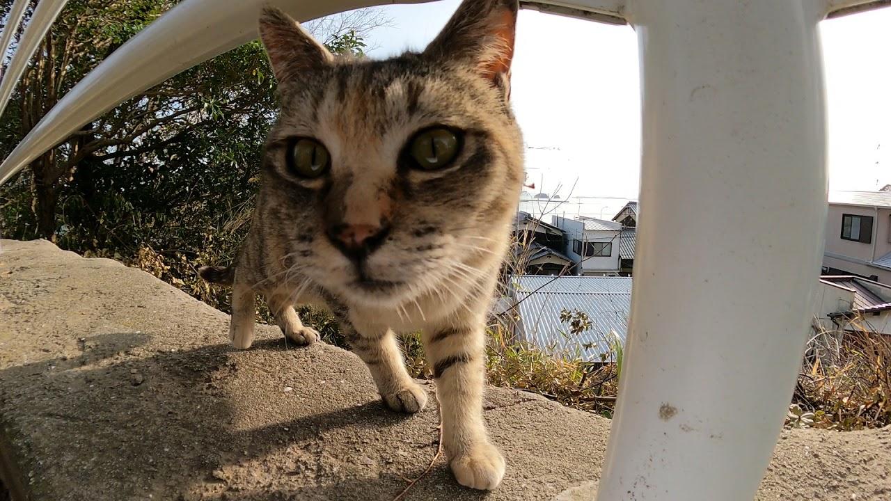 崖っぷちで休む野良猫達
