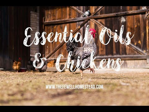Essential Oils and Chickens