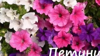 видео Виды цветников и стили их оформления