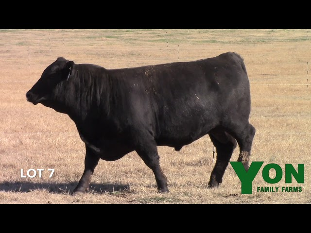 Yon Family Farms Lot 7
