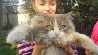 Bir Kedi Bulduk Sahibini aradık Hayvanlar Kediler