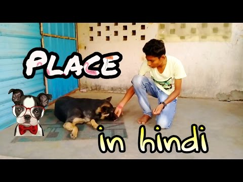 How to teach place command to your dog in Hindi | Dogs training in hindi | Obidience training |