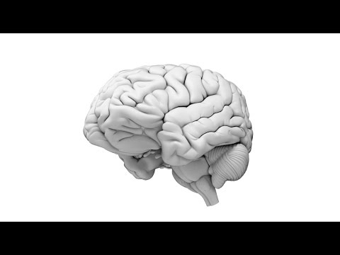 Test your memory with this game from Johns Hopkins - YouTube