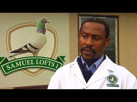 Meet Samuel Mbiza - South Africa's black champion pigeon racer