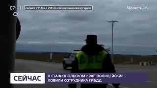 Смотреть видео Сотрудник ГИБДД на Ставрополье сбил человека и скрылся с места ДТП   Москва 24 онлайн