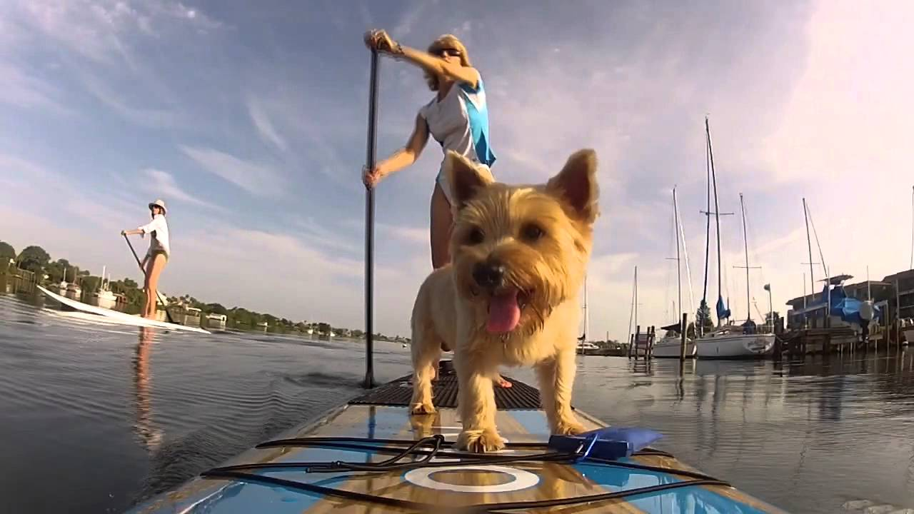 Kiwi The Yolo Dog Rides Again Sup Paddle Board Youtube